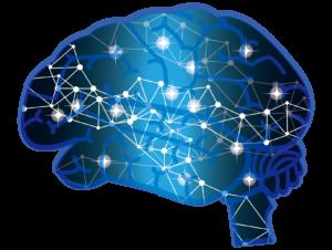 脳回路と記憶
